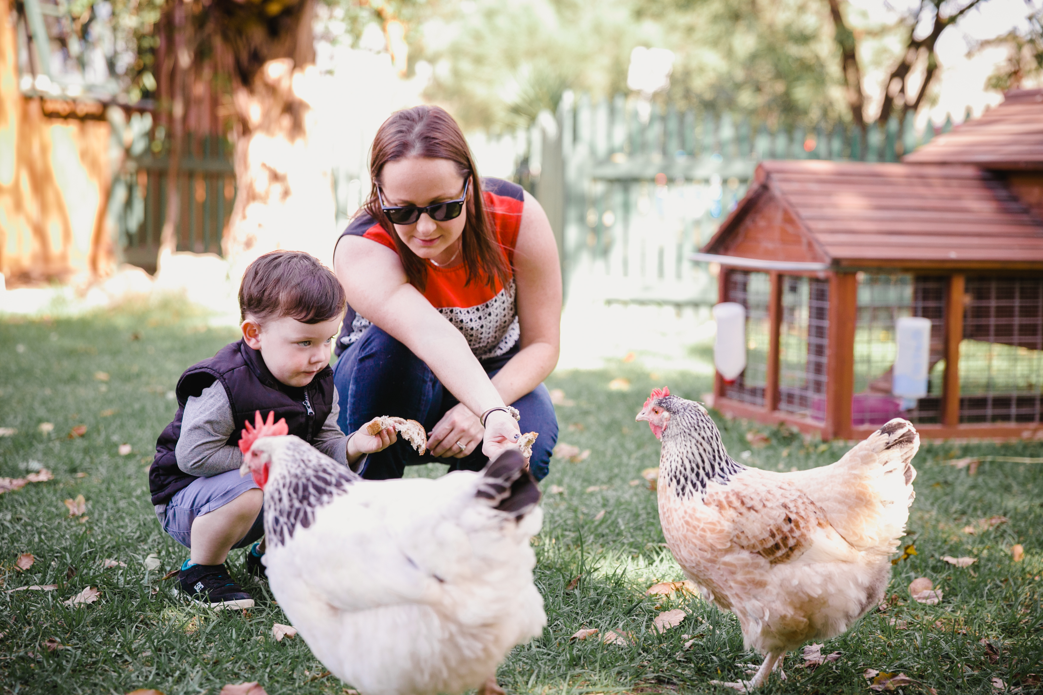 mum and son feeding chickens